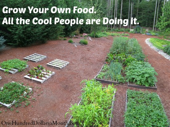 Mavis Butterfield | Backyard Garden Plot Pictures – Week 33 of 52