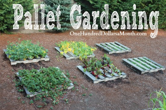 Pallet Gardening – The Strawberries are Going Bonkers!