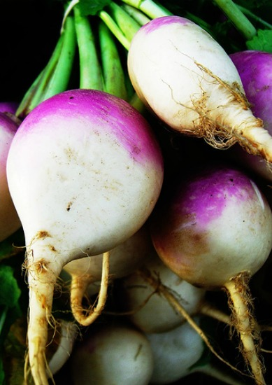 How to Grow Turnips {Start to Finish}