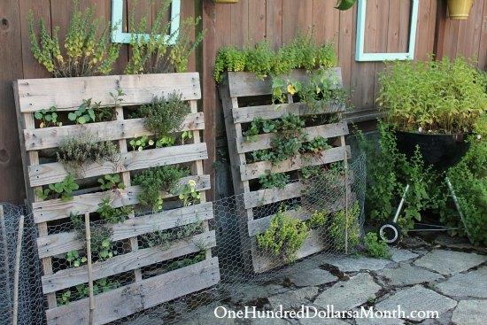 Vertical Gardening Pallet images