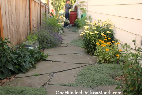 walkway with creeping thyme