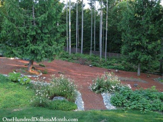 Mavis Butterfield   Backyard Garden Plot Pictures – Week 31 of 52