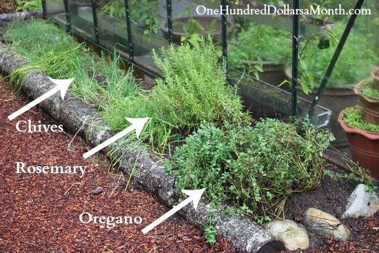 creating a new perennial herb garden