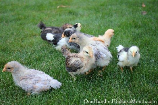 Free Peep Show – See Hot Chicks!