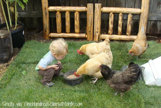 chickens and children