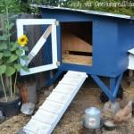 cool chicken coop photos