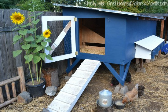 Mavis Mail – Cool Chicken Coop Photos
