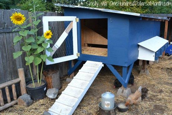 Mavis Mail – Cool Chicken Coop Photos