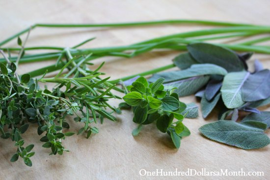 Harvesting and Drying Herbs From the Garden