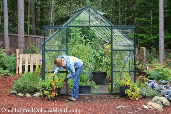 Growing Vegetables in a Greenhouse – Fall Clean Up