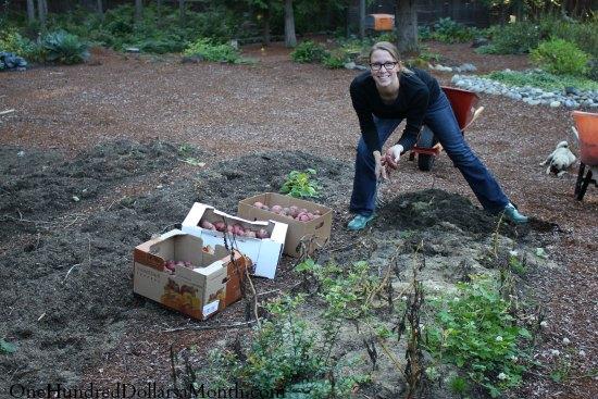 Mavis Garden Blog – The Latest Harvest