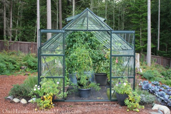 Growing Vegetables in a Greenhouse – Lettuce, Peas, Lemons and Tomatoes