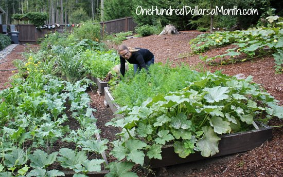 How to Grow Your Own Food – 9/18/2013 Garden Tally
