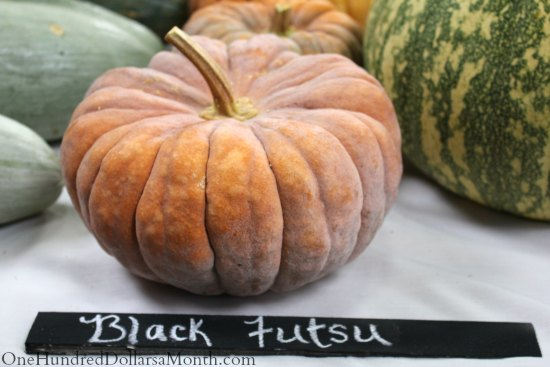 National Heirloom Exposition – Heirloom Squash