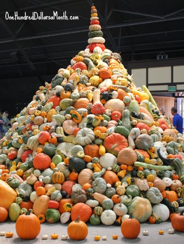 national heirloom exposition squash tower