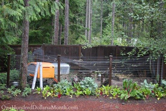 Mavis Butterfield | Backyard Garden Plot Pictures – Week 39 of 52