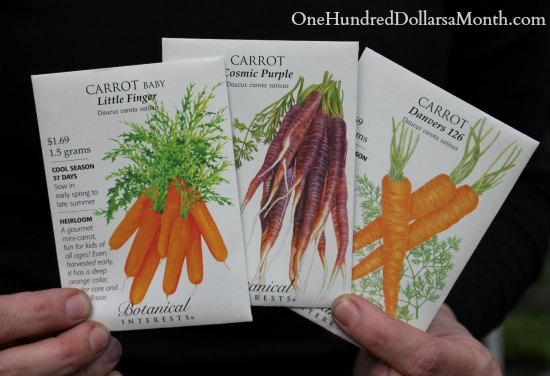 How to Grow Carrots {Start to Finish}