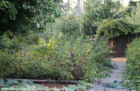 Mavis Butterfield | Backyard Garden Plot Pictures – Week 36 of 52