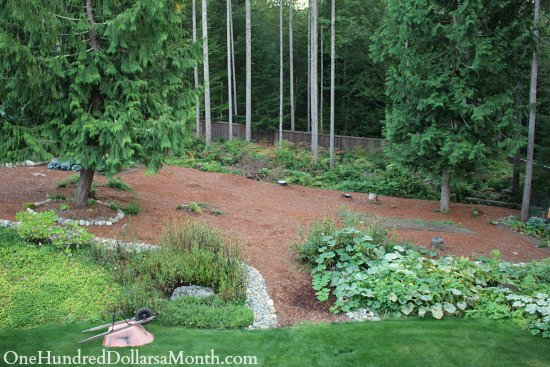 Mavis Butterfield   Backyard Garden Plot Pictures – Week 37 of 52