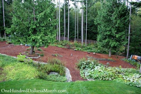 Mavis Butterfield   Backyard Garden Plot Pictures – Week 38 of 52
