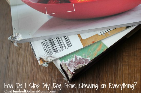 Help!  How Do I Stop My Dog From Chewing on Everything?