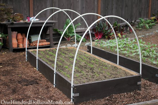 How to Build a Small Poly Tunnel One Hundred Dollars a Month