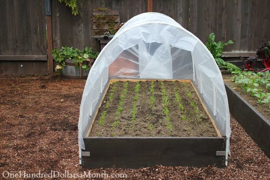 How to build a small poly tunnel for How to green your home