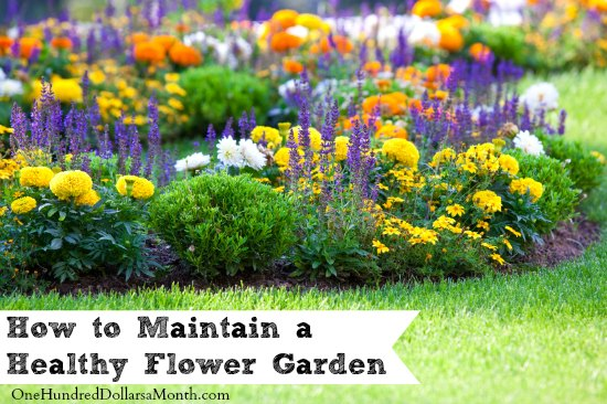 How to Maintain a Healthy Flower Garden