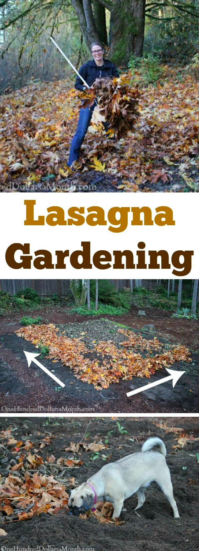 Lasagna Gardening – Adding Another Layer of Leaves