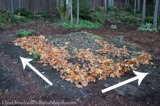 Lasagna gardening adding another layer of leaves - Lasagna gardening in containers ...