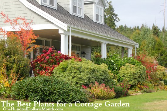 The Best Plants for a Cottage Garden