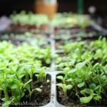 grow lights seedlings