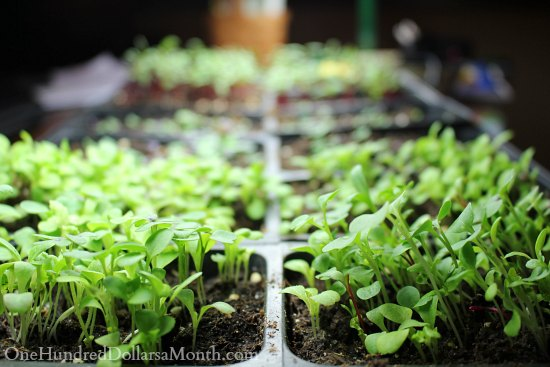 grow lights seedlings