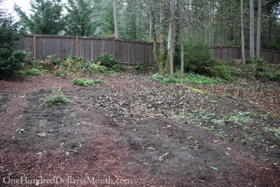 Mavis Butterfield | Backyard Garden Plot Pictures – Week 43 of 52