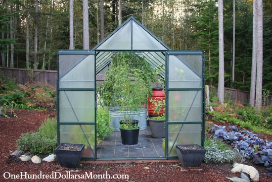 Greenhouse Gardening – Tomatoes in October? No Way!