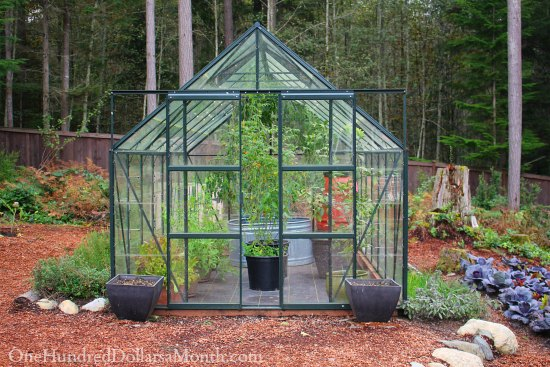 Mavis Butterfield | Backyard Garden Plot Pictures – Week 41 of 52