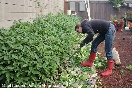 Mavis Butterfield | Backyard Garden Plot Pictures – Week 40 of 52