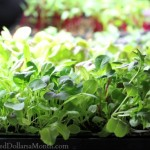 seedlings grow lights