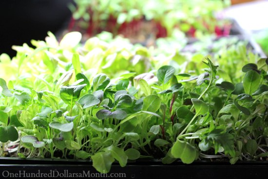How to Grow Your Own Food – 10/23/2013 Garden Tally