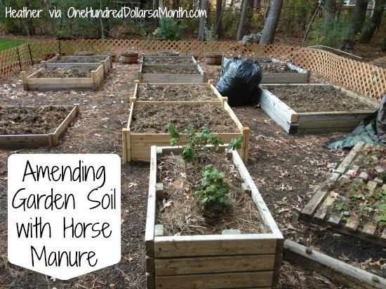 ammending soild with horse manure