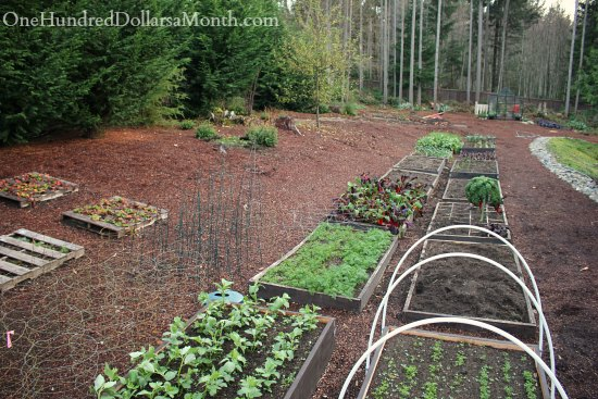 Mavis Butterfield | Backyard Garden Plot Pictures – Week 47 of 52