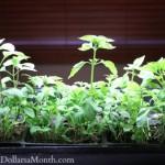 grow lights basil