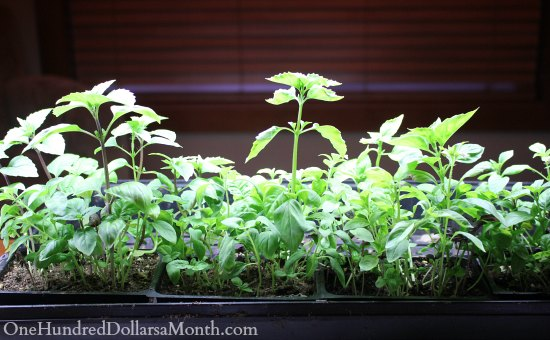How to Grow Your Own Food – 11/14/2013 Garden Tally