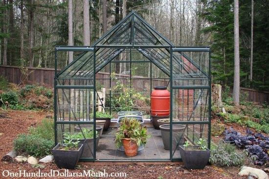 My Winter Greenhouse Garden