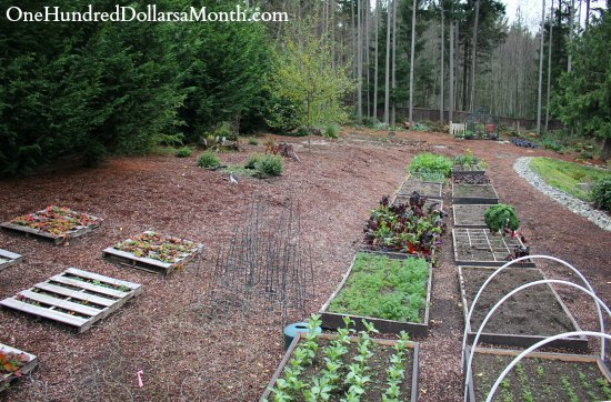 Mavis Butterfield | Backyard Garden Plot Pictures – Week 46 of 52