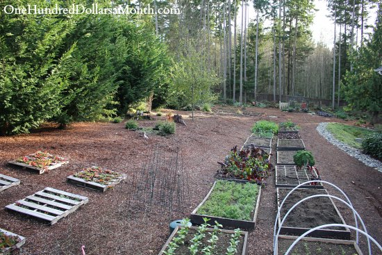 Mavis Butterfield | Backyard Garden Plot Pictures – Week 45 of 52