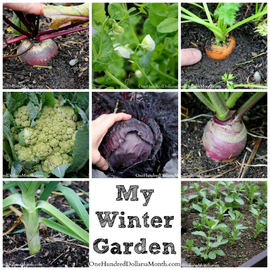 Mavis garden blog a walk in my winter garden one hundred dollars a month - Gardening mistakes maintaining garden winter ...