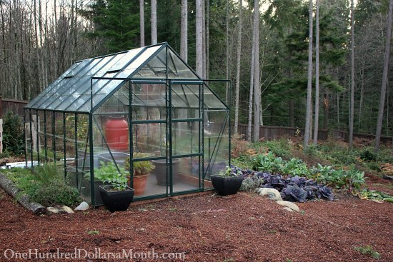 winter greenhouse garden