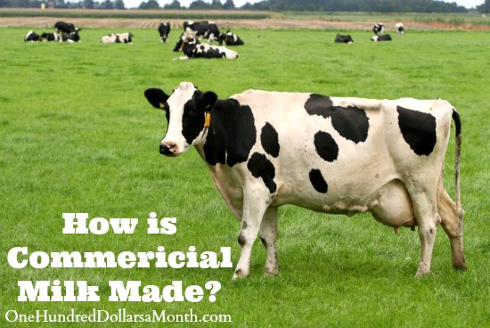 What's In My Food – How Commercial Milk is Made