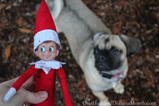 Elf On The Shelf Attacked By Puggle Dog One Hundred